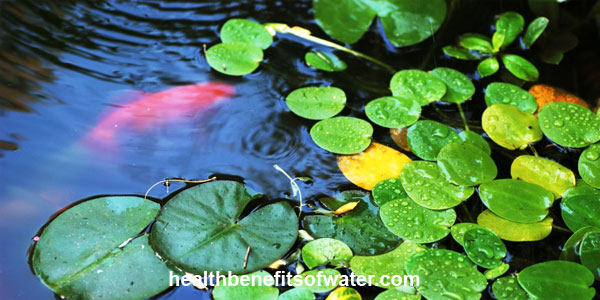 Feng Shui Water Element